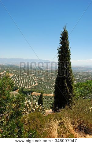 View Of Olive Groves And Countryside Seen From The Plaza Santa Lucia, Ubeda, Andalucia, Spain.