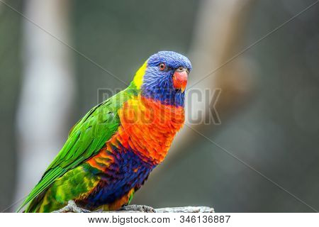 Lori parrot - small, brightly colored in all colors of the rainbow, woody parrot. Parrot sits on a tree stump. The concept of exotic and ecological tourism