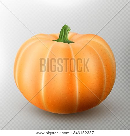 Realistic Macro Orange Pumpkin Isolated On Transparent Background. Eps 10