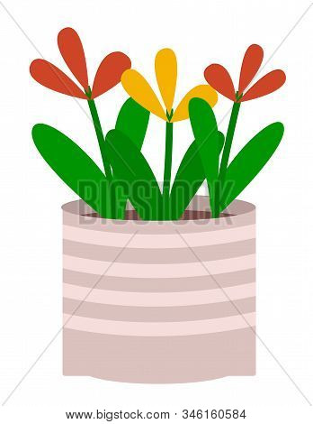 Plant In Pot Isolated In White Background. Flowers That Grown Indoor In Potting Soil. Vegetation Wit