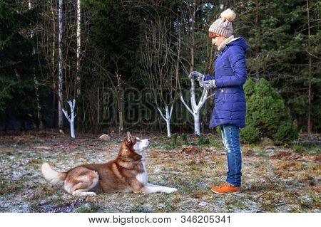 Girl Trains Husky Dog. Woman And Pet. Walking With Training Obedience And Cute Dog.