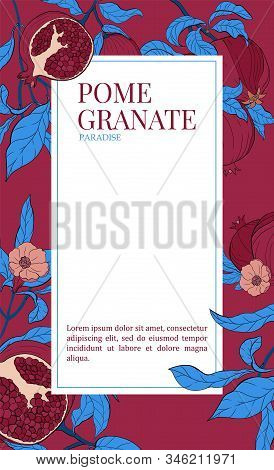 Vector Vertical Banners With Pomegranate Fruits On Burgundi Background. Design For Cosmetics, Spa, P
