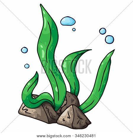 Sea Kale. Vector Illustration Of Algae. Hand Drawn Sea Kale, Seaweed.