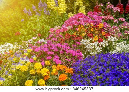 Flowers In Bloom.beautiful Garden On A Sunny Day. Group Of Pansy Flowers, Snapdragon Flower, And Oth