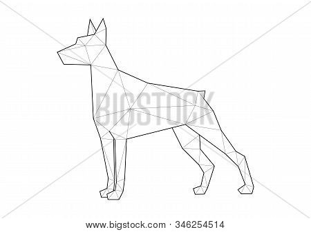 Low Poly Illustrations Of Dogs. Doberman Standing.