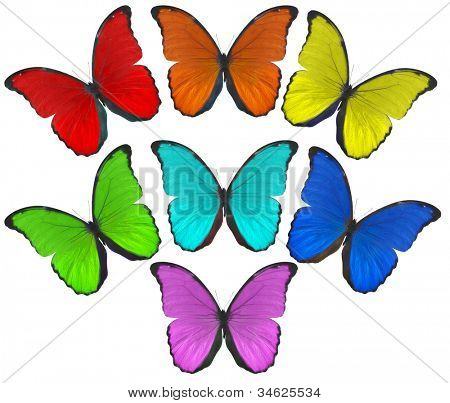 illustration with rainbow color butterflies