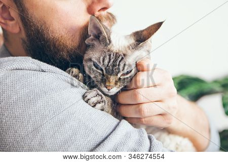Close-up Of Beard Man Who Holds His Cute Purring Devon Rex Cat. Muzzle Of A Glad And Happy Cat. Love