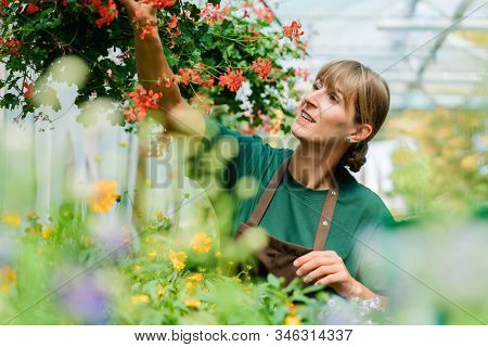 Gardener woman in her shop taking care of some flowers in hanging basket