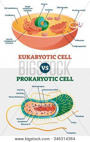 Eukaryotic Vs Prokaryotic Cells, Educational Biology Vector Illustration Diagram. Microbiology Schem