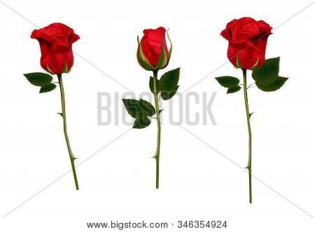 Red Rose Isolated On A White Background. Vector Illustration. Realistic Rose. Bud. Colors For A Bouq