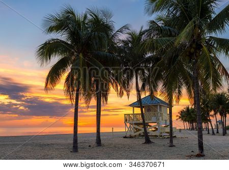 Palm Trees At Sunrise By The Ocean Beach In Key Biscayne, Florida