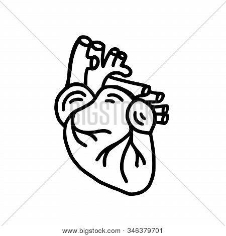 Human Heart Organ Hand Drawn Doodle Icon. Anatomical Heart Shape. Vector Illustration