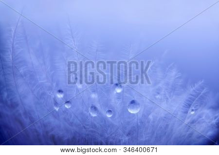 Small drops of water on the feather. Abstract plants. Nature background. Mood light. Macro photo.