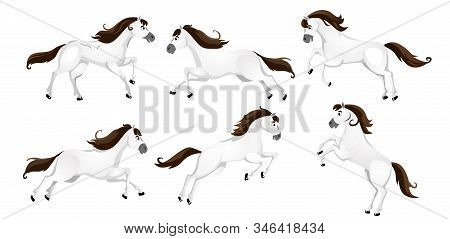 Set Of Cartoon Horses In Different Poses