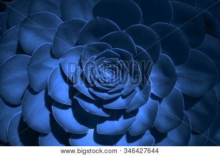 Trend Color 2020 Classic Blue, Top View, Layout For Design. Succulent Plant Flower In Trendy Blue Co