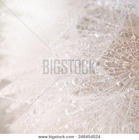 Beautiful Dew Drops On A Dandelion Seed Macro.
