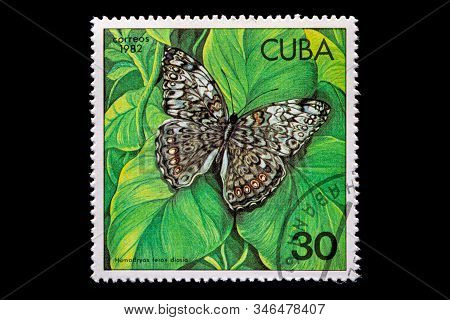Novosibirsk, Russia - January 07, 2020: Stamp Nature Collection Printed In  Cuba  Shows Black Hamadr
