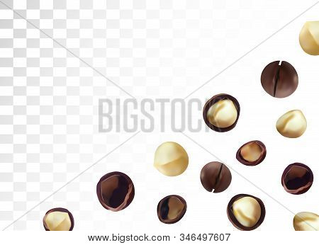 3d Realistic Macadamia Nut Isolated On Transparent Background. Shelled And Unshelled Macadamia Nuts