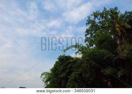 Tree Again Bright Blue Sky, Summer Tree Top Views Adorn The Blue Sky.