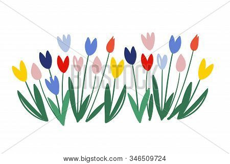 Color Vector Tulips Isolated On White Background. March 8 - International Women S Day. Tulip Alley.