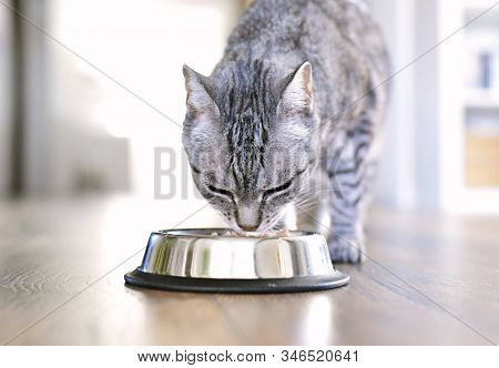 Cute Tabby Cat Eating. Silver Bowl, Cat Feeding Scene With Selective Focus. Eating Grey Cat.