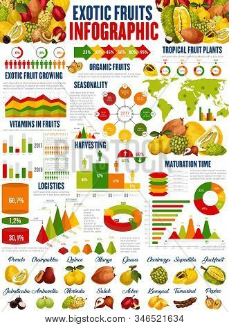 Exotic Fruits Vector Infographics. Growing, Harvesting And Vitamins Consumption. Fruit Nutrition Fac