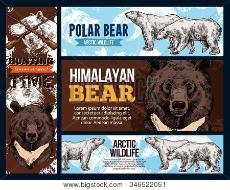Polar Andhimalayan Bears, Wildlife And Hunting. Vector White And Brown Bear Animal Sketches. Full Le