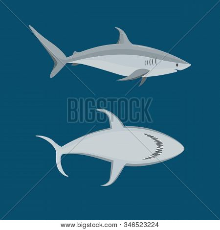 Cartoon Blue Characters Shark Icon Set On A Blue Wildlife Predator Concept Element Flat Design Style