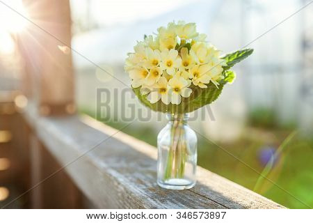 Easter Concept. Bouquet Of Primrose Primula With Yellow Flowers In Glass Vase Under Soft Sunlight An