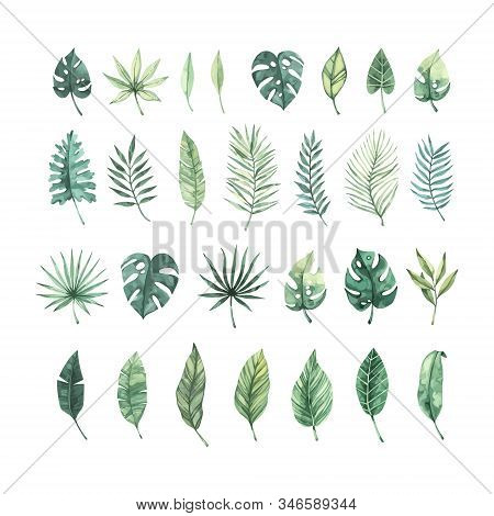 Watercolor Vector Illustration. Summer Tropical Collection With Banana Leaves, Monstera And Palm Lea