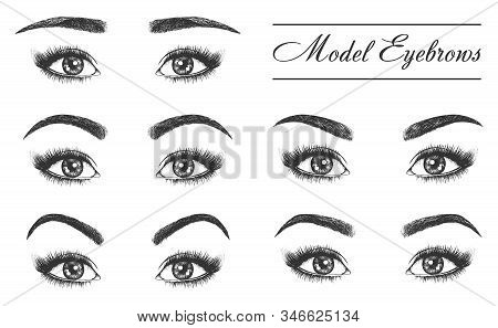 Female Eyebrows, Eyes And Lashes, Vector Sketch Icons. Woman Eyebrows And Lashes Different Style For