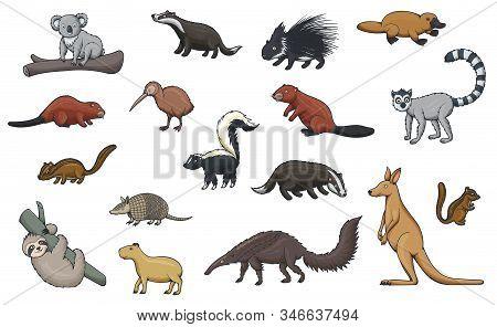 Animal Cartoon Icons Of Hunting Sport, Zoo And Wildlife. Vector Kangaroo, Koala And Platypus, Kiwi B