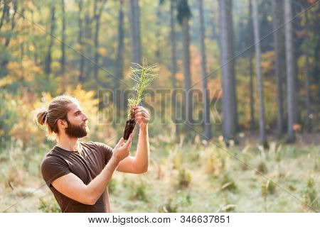 Forester or forester with seedling for afforestation in sustainable forestry