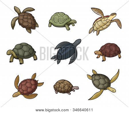 Sea Turtle, Tortoise And Terrapin Cartoon Icons Of Wild Animals. Vector Reptiles With Shells, Feet O