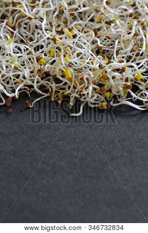 Closeup Of Raw Alfalfa Sprouts, Close Up