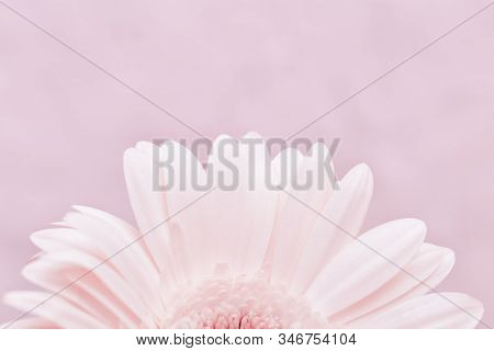 Delicate Petals Of White Gerbera Flower Close Up. Natural Flowery Background With Copy Space, Pastel