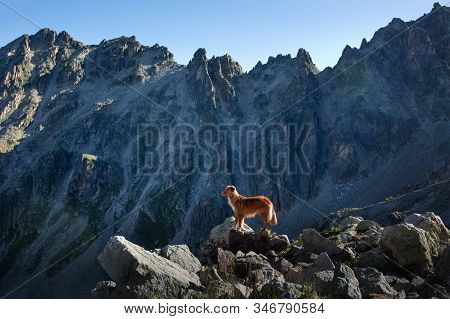 Dog In The Mountains. Travel With A Pet In Georgia. Nova Scotia Duck Tolling Retriever Stands On A R