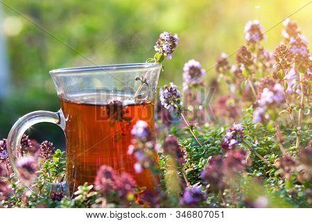 Cup Of Hot Herbal Tea In Thyme Herbs In Summer. Turkish Tea Cup