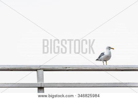 Frowning Seagull With Red Beak On White Fence Against White Sky. Minimal Image Of Funny Seagull. Sin