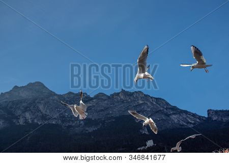 The Flight Of Birds Against The Blue Sky In Backlight