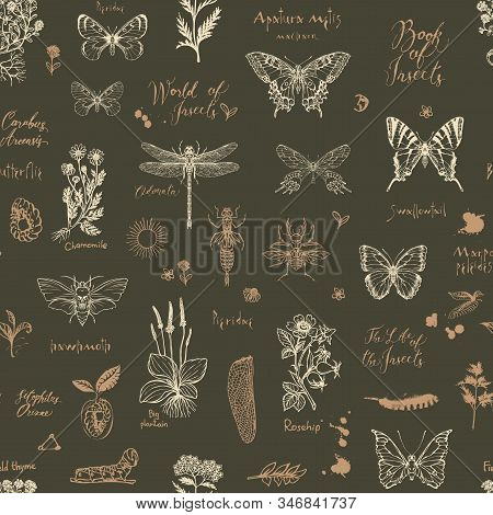 Vector Seamless Pattern With Sketches Of Insects And Medicinal Herbs In Retro Style. Hand-drawn Herb