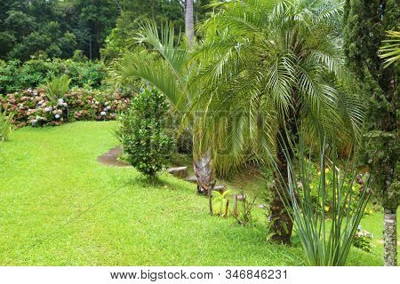 Beautiful Outdoor Tropical Garden With Green Grass And Palm Trees. Rural Area Near Sao Paulo, Brazil