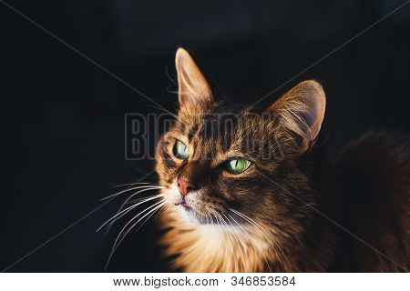 Beautiful Cat Face Portrait On Dark Background.