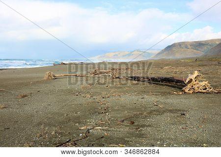 Driftwood On A Vast Windswept Black Sands Beach Taken In The Rural Northern California Coast
