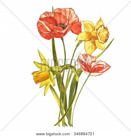 Watercolor Narcissus And Poppy. Wild Flower Set Isolated On White. Botanical Watercolor Illustration