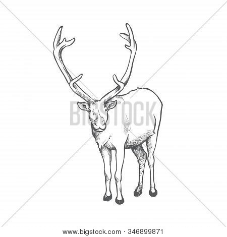 Reindeer Doodle Art - Santa Claus Magic Christmas Reindeer Fly Jump - In The Sky, Holiday Decoration