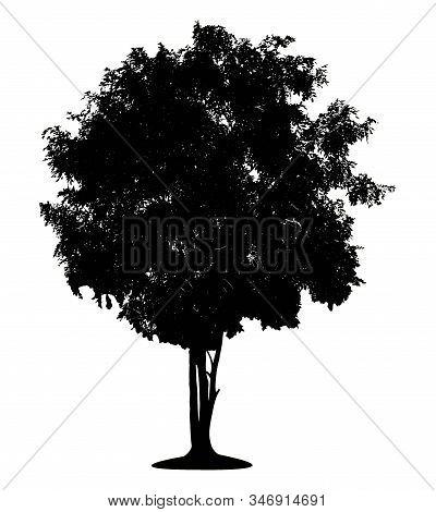 Black Tree Shadow Isolated On White Background.