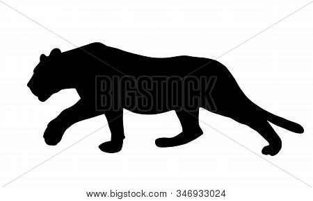 Realistic Illustration Of A Feline, Lion Or Panther, Sneaking And Hunting - Vector