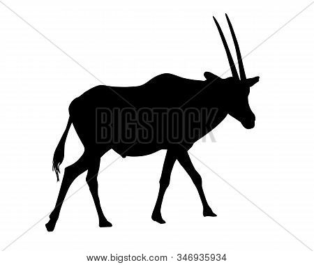Realistic Illustration Of Silhouettes Of Gazelle Or Antelope. Horned Oryx Standing - Vector