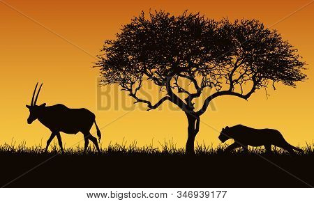 Realistic Illustration Of A Creeping Lion And Gazelle Or Antelope Silhouettes. The Feline Hunts For